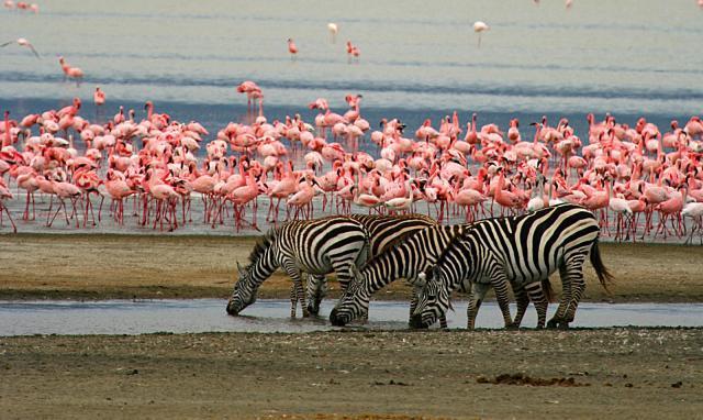 Manyara järv