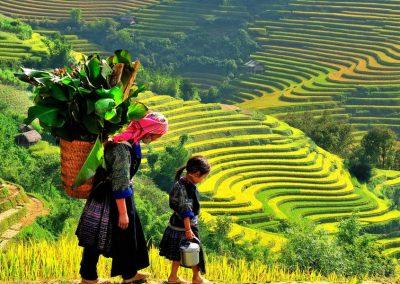 Mustad hmongid, Sapa